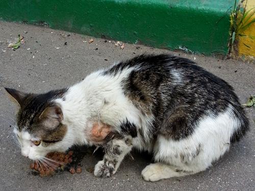 исцеление животных